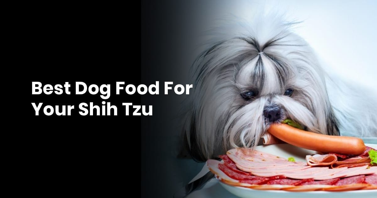 Best Dog Food For Your Shih Tzu