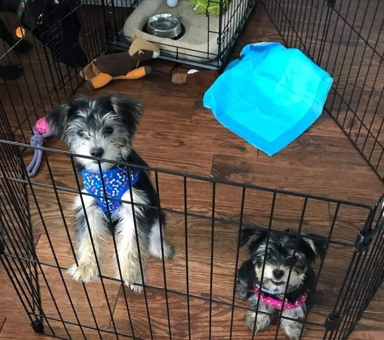 Shih Tzu Playpen for sleeping
