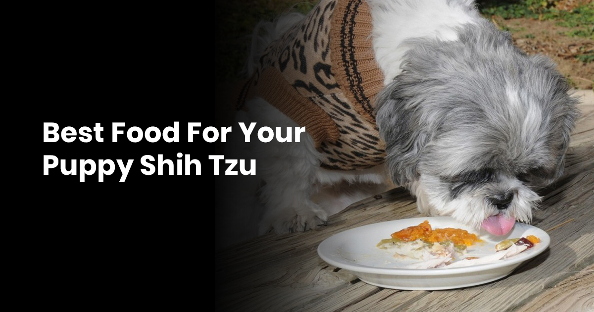 Best Food For Your Puppy Shih Tzu