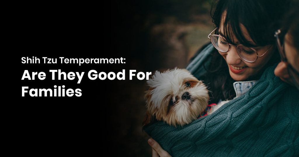 Shih Tzu Temperament Are They Good For Families