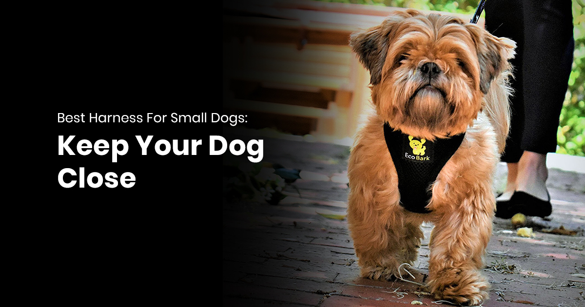 Best Harness For Small Dogs: Keep Your Dog Close