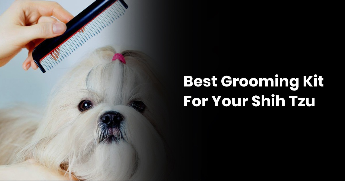 Best Grooming Kit For Your Shih Tzu