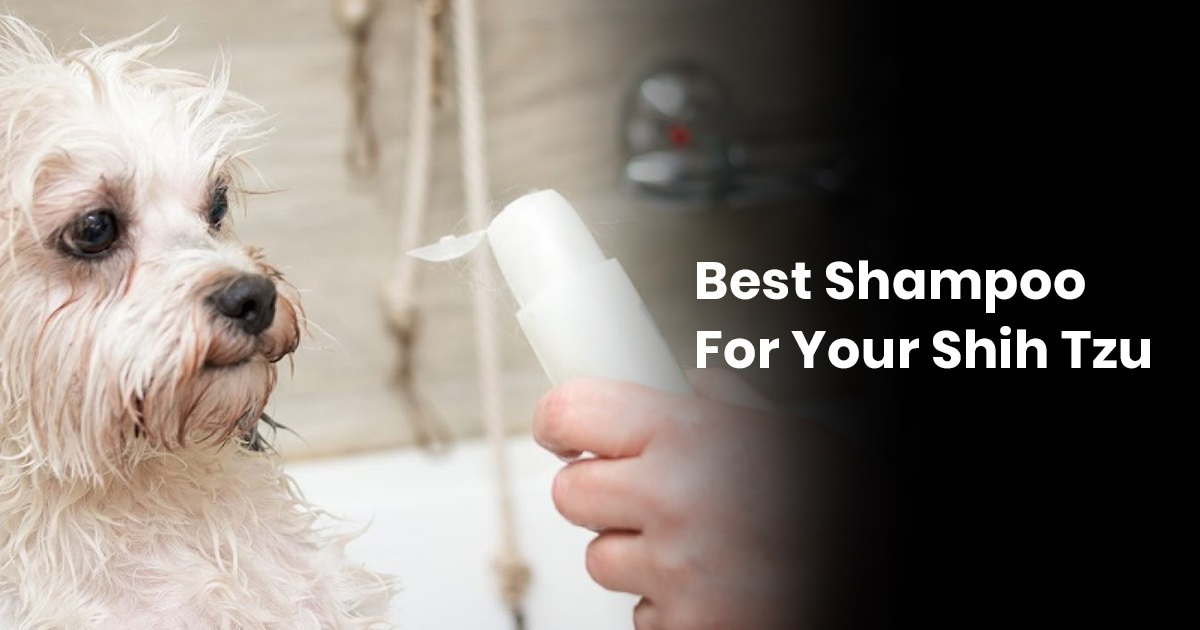 Best Shampoo For Your Shih Tzu