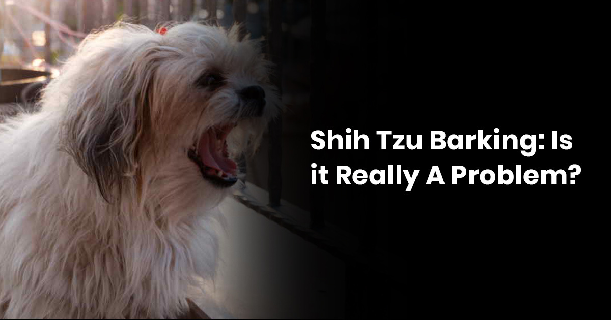 Shih Tzu Barking - Is It Really A Problem?