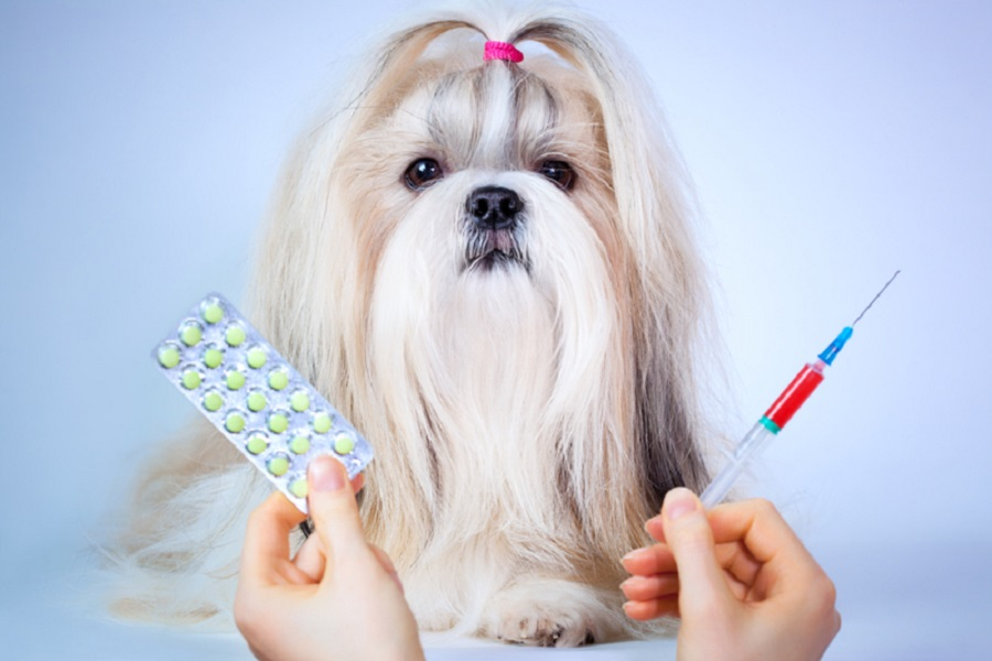 Shih Tzu And Allergies: Are They Hypoallergenic?